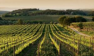 territoria Chianti Classico a Fèlsina- Rancia